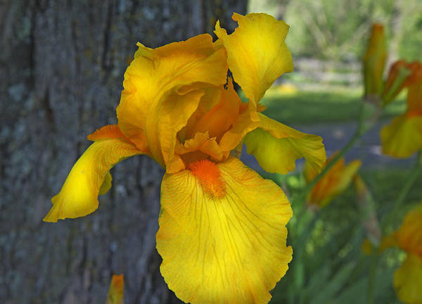 Lively Photograph - A Lively Soul Blooms by Betsy Knapp