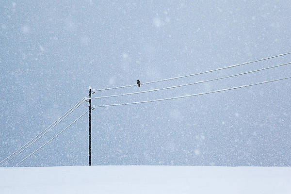Electricity Photograph - A Long Day In Winter by Uschi Hermann