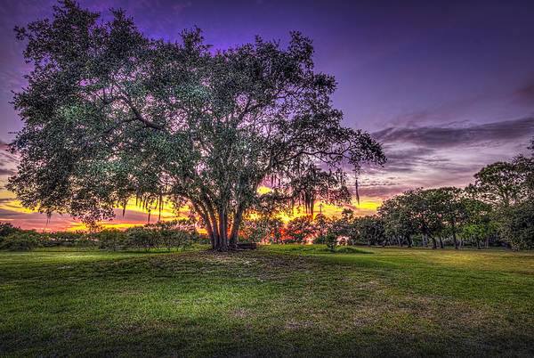 Oak Trees Photograph - A Look Back by Marvin Spates