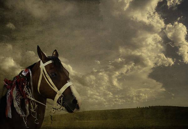 Digital Art - A Lovely Horse by Eduardo Tavares