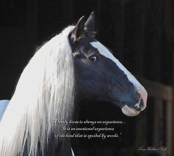 Photograph - A Lovely Horse With Verse by Terry Kirkland Cook