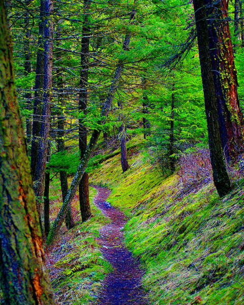 Photograph - A Magical Path To Enlightenment by Ben Upham III