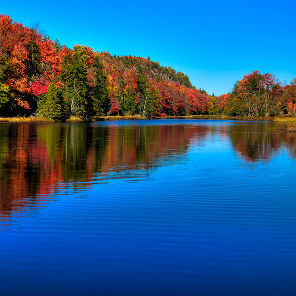 Photograph - A Majestic Autumn At Bald Mountain Pond by David Patterson