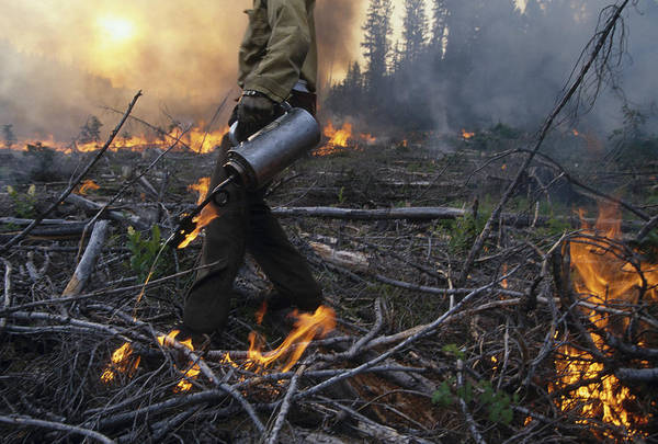Wall Art - Photograph - A Man Helps Fight A Forest Fire by Peter Essick
