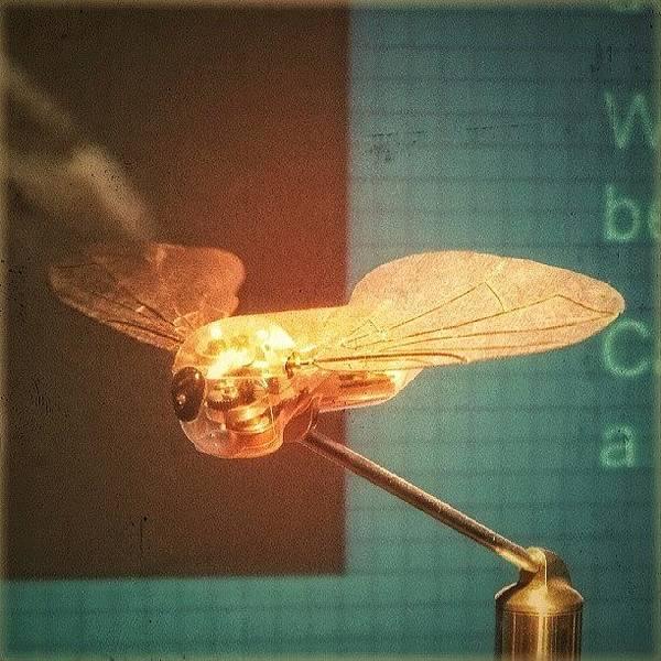 Steampunk Wall Art - Photograph - A #mechanical #fly From A #birmingham by Alexandra Cook