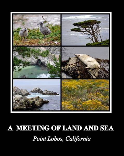Photograph - A Meeting Of Land And Sea by AJ  Schibig