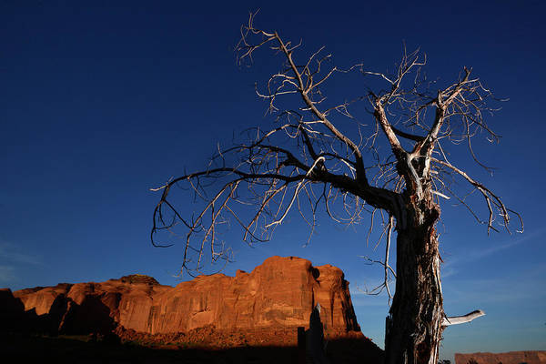 Wall Art - Photograph - A Mesquite Trees And Buttes by Raul Touzon