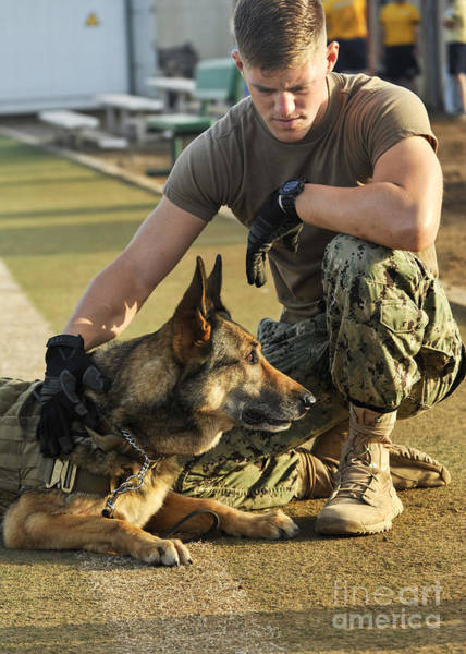 Dog Training Photograph - A Military Working Dog Handler, Pets by Stocktrek Images