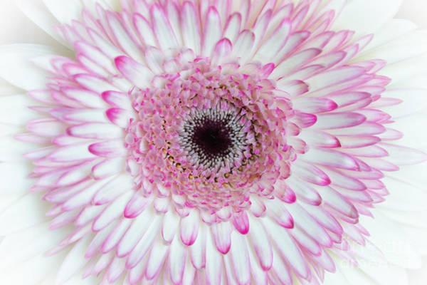Photograph - A Million Petals by Ana V Ramirez
