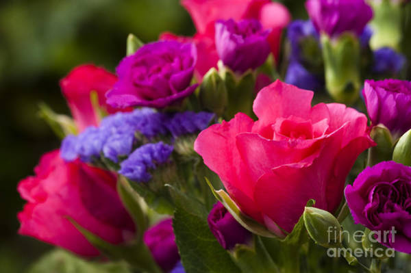 Plumbaginaceae Photograph - A Mixed Bouquet by Anne Gilbert