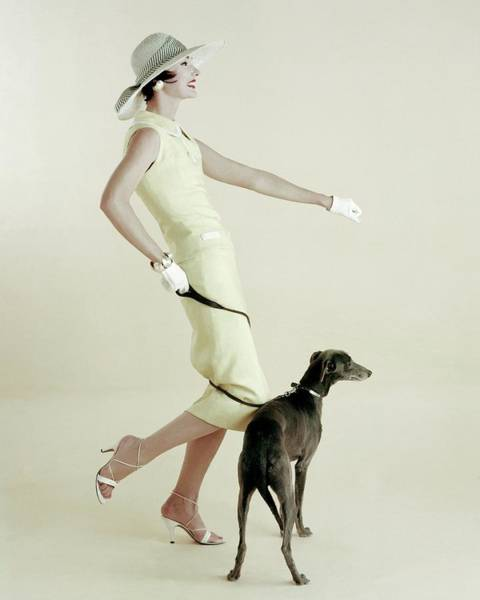 Yellow Background Photograph - A Model Walking A Dog by Richard Rutledge