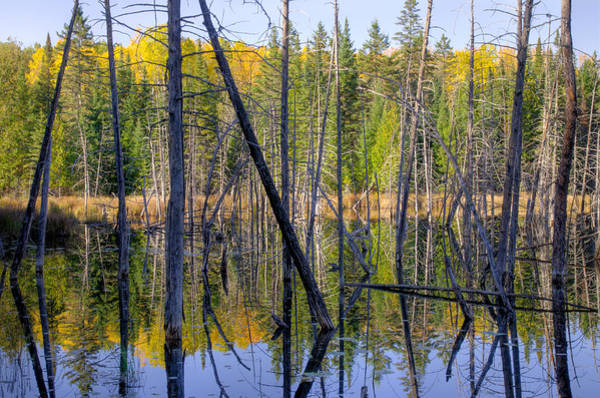 Photograph - A Moment For Reflection. by Rob Huntley