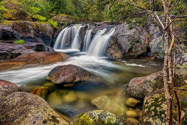 Photograph - A Mountain Flow by Mark Lucey