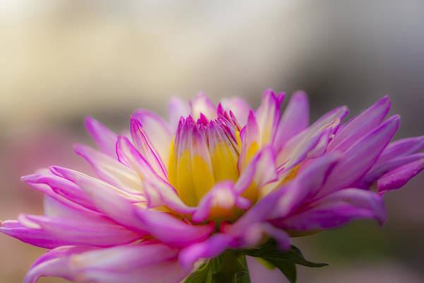Photograph - A Natural Beauty by Fran Riley