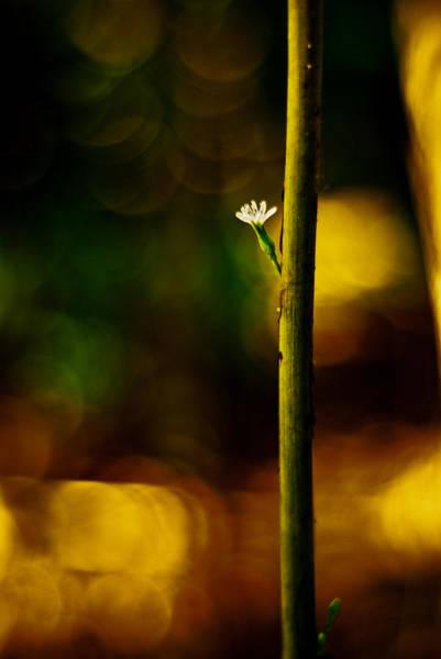 Photograph - A New Beginning by Darryl Dalton
