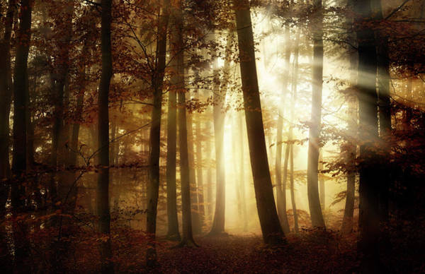 Woods Photograph - A New Day by Norbert Maier