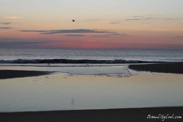 Photograph - A One Seagull Sunrise by Robert Banach