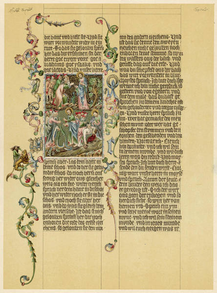 Wall Art - Drawing - A Page From The Illuminated Manuscript by Mary Evans Picture Library