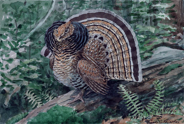 Ruffed Grouse Photograph - A Painting Of A Ruffed Grouse, Bonasa by Louis Agassi Fuertes
