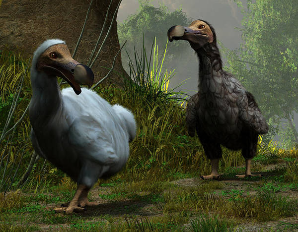 Digital Art - A Pair Of Dodos by Daniel Eskridge