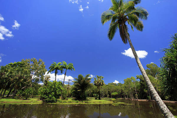 Far North Queensland Wall Art - Photograph - A Palm Tree On The Shore Of The Salt by Paul Dymond