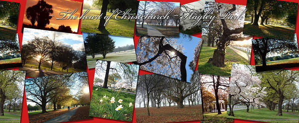 Photograph - A Park For All Seasons by Jenny Setchell