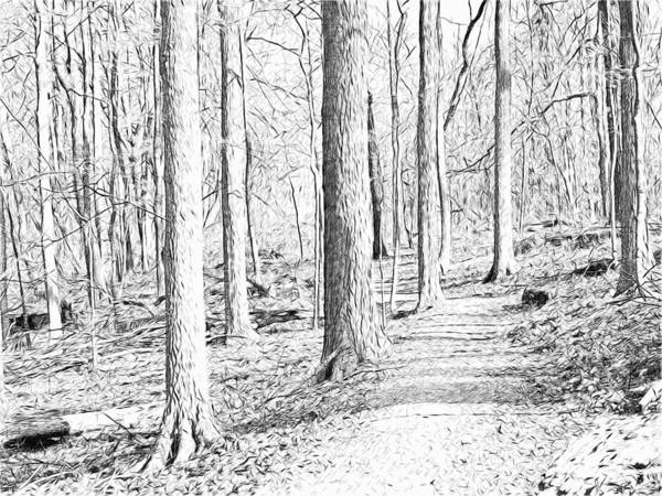 Digital Art - A Path Through The Woods In Early November. by Digital Photographic Arts