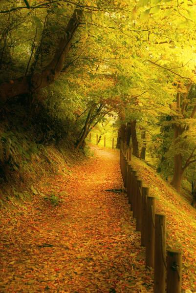 Photograph - A Path Well Chosen by Tim Ernst