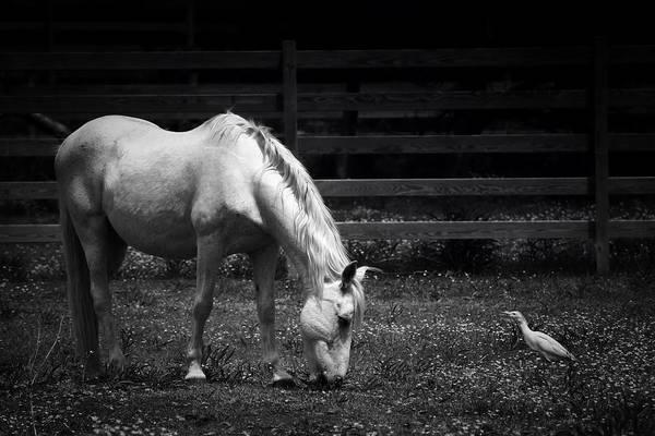 Photograph - A Patient Friend by Ben Shields