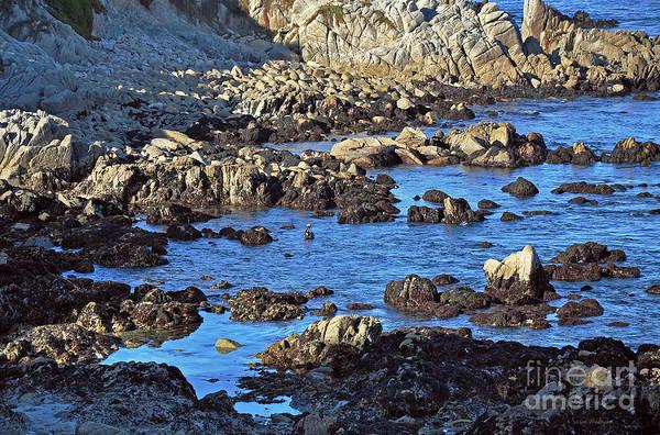 Photograph - A Pelican's Rocky Retreat by Susan Wiedmann