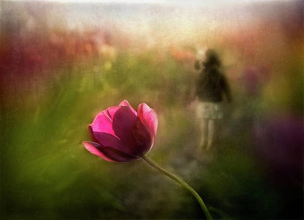 Tulip Flower Photograph - A Pink Childhood Memory by Shenshen Dou