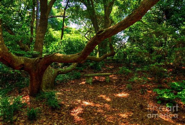 Roanoke Island Wall Art - Photograph - A Place To Rest by Mel Steinhauer