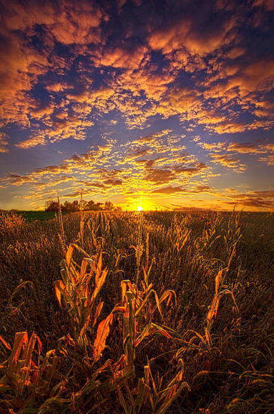 Back Light Photograph - A Place You Call Home by Phil Koch