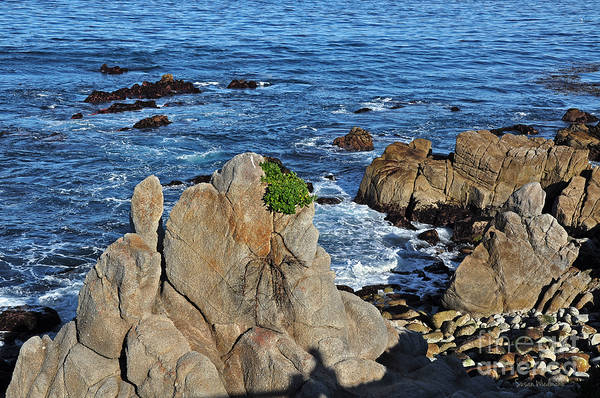 Photograph - A Plant Grows On Ancient Seaside Rocks by Susan Wiedmann