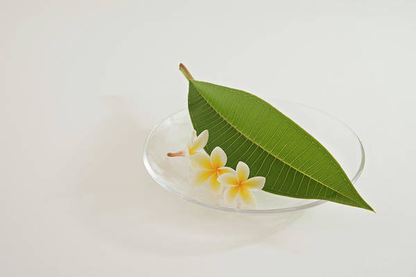 Frangipani Photograph - A Plate Of Plumeria Flowers And Leaf by Margarita Komine