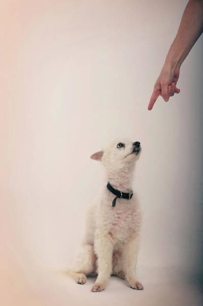 Breed Of Dog Photograph - A Pointing Finger Points In A Punishing by Stacy Pearsall