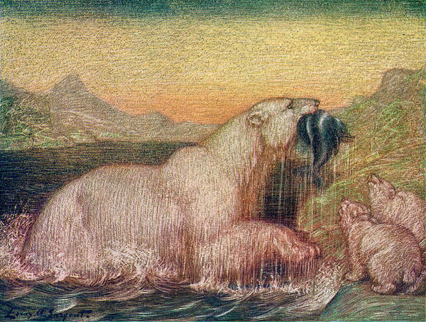 Polar Bear Drawing - A Polar Bear Catches Food For  Her Cubs by Mary Evans Picture Library