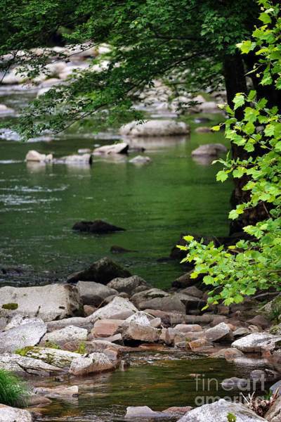 Wall Art - Photograph - A Pool Within A Creek by Eva Thomas