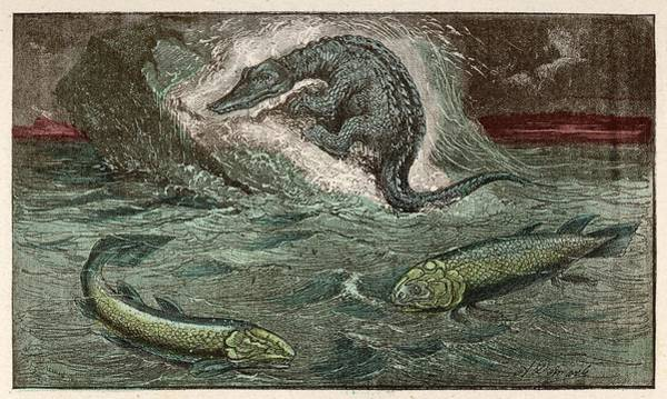 Developed Drawing - A Protosaurus, And Two Of The  Marine by Mary Evans Picture Library