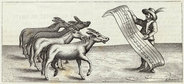 Actually Drawing - A Quartet Of Donkeys, Selected by Mary Evans Picture Library