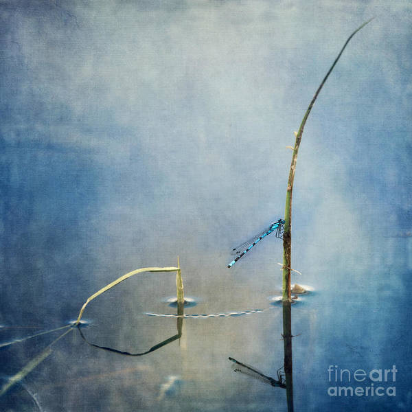 Wall Art - Photograph - A Quiet Moment by Priska Wettstein