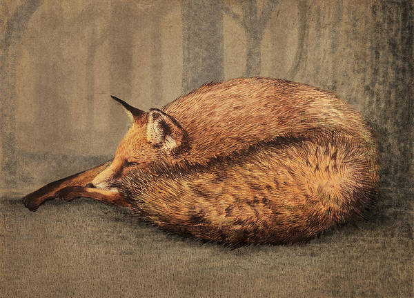 Animal Wall Art - Drawing - A Quiet Place by Eric Fan