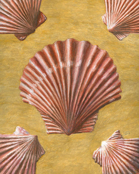 Drawing - A Quincunx Of Scallop Shells by Dominic White