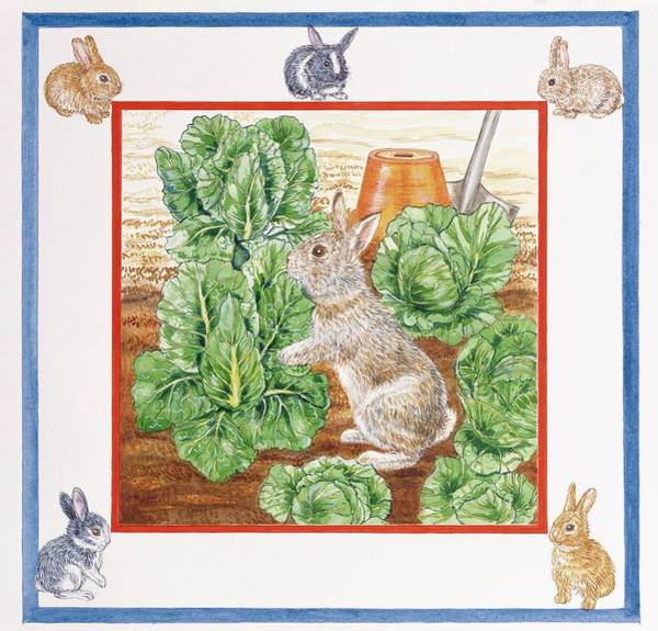 Rabbit Photograph - A Rabbit In The Cabbage Patch Wc On Paper by Catherine Bradbury