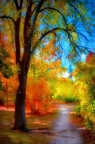Photograph - A Rainbow Of Leaves by Tara Turner