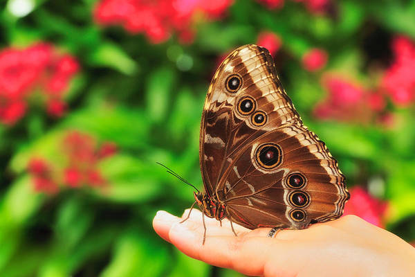 Photograph - A Random Walk In The Butterfly Garden by Photography  By Sai