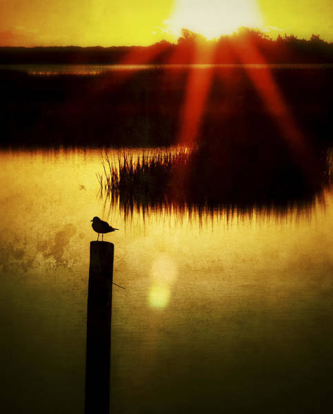 Photograph - A Ray Of Hope Sunrise Sunset Image Art by Jo Ann Tomaselli