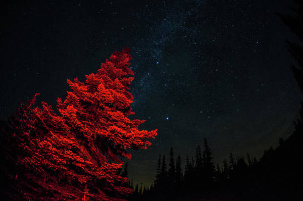 Photograph - A Red Tree With Starry Sky by Brian Xavier Photography