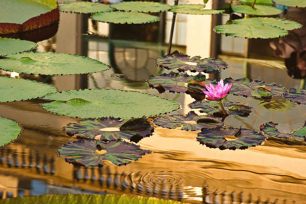 Longwood Gardens Photograph - A Reflection by Samantha Eisenhauer