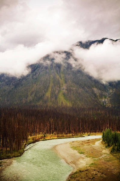 Wall Art - Photograph - A River Runs Through Burnt Out Trees by Todd Korol
